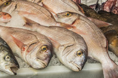Fish, Central market in Malaga city, Spain Stock Image