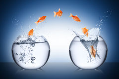 Fish change concept. Fish bowl jump change concept Stock Images