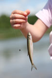 Fish in child hand. Closeup of fish on the fish-hook in child hand royalty free stock photos