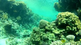 Fish and clear water. Tropical sea. Red sea Underwater life fish on the bottom. The corals and the caves. Corals. Fish and clear water. Tropical sea stock footage
