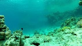 Fish and clear water. Underwater life fish on the bottom. The corals and the caves. Corals. Fish and clear water stock footage