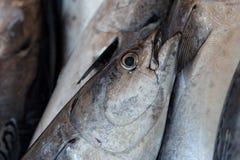 Fish - Close up. Fish at a fish market. Istanbul, Turkey royalty free stock image