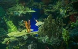 Fish. Close up in an aquarium Stock Images