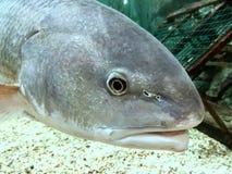 Fish close up Stock Image
