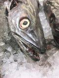 Fish, Close up. Seafood , Animal Fresh fish , frozen fish Stock Photos