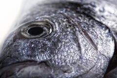 Fish close up Stock Images