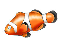 Fish Clown. Clown Fish Illustration In White Background Royalty Free Stock Photos