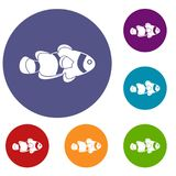 Fish clown icons set. In flat circle red, blue and green color for web Royalty Free Stock Images