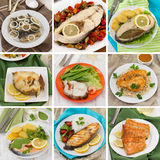 Fish collage royalty free stock photos