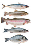 Fish Collection Stock Image