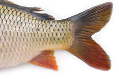 Fish collection Stock Images