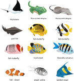 Fish collection Stock Photos