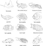 Fish collection in Black & White Royalty Free Stock Photography