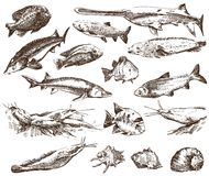 Fish collection. Detailed design of  fish collection  on background Stock Photos