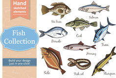 Fish collection Dorado Eel Tuna, Salmon Halibut Herring Sea bass Cod Sturgeon. Fish collection Dorado Fish Eel Tuna Salmon Halibut Herring Sea bass Cod Sturgeon Stock Photo