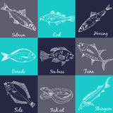 Fish collection Dorado Fish Eel Tuna. Fish collection Dorado Fish Ee Tuna Salmon Halibut Herring Sea bass Cod Sturgeon Stock Image