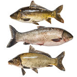 Fish collection. Isolated on white background Royalty Free Stock Image
