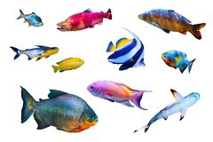 Fish collection isolated on white. Olored fish collection isolated on white background royalty free stock photo
