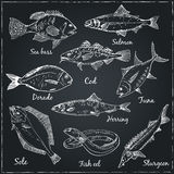Fish collection Vector. Beautiful hand drawn illustration with different fishes, gilt head and sea bass Stock Images