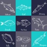 Fish collection. Vector Stock Photos