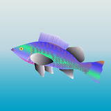 Fish. Colorful fish on background. Vector Illustration Stock Photography