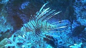 Fish. Colorful beautiful fish stock photo