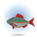 Fish. Colorful illustration with fish for your design Stock Images