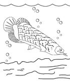 Fish coloring page. Long fish coloring book for kids Royalty Free Stock Images