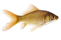 Fish Stock Image