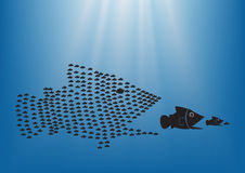 Fish concept 2. Many  fish together as big fish of concept business teamwork Royalty Free Stock Photo