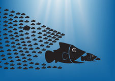 Fish concept 1. Many  fish together as big fish of concept business teamwork Stock Photography
