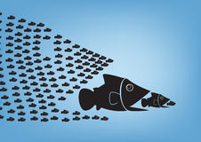 Fish concept. Many  fish together as big fish of concept business teamwork Royalty Free Stock Photo
