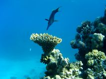 Fish and coral. Fiash above the coral branch Stock Image
