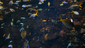 Fish and coral in aquarium stock footage