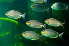 Fish with coral and aquatic animals. Aquarium fish with coral and aquatic animals Royalty Free Stock Image