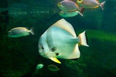 Fish with coral and aquatic animals. Aquarium fish with coral and aquatic animals Royalty Free Stock Images
