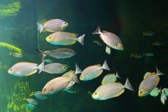 Fish with coral and aquatic animals. Aquarium fish with coral and aquatic animals Stock Images