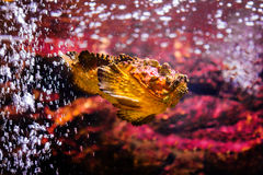 fish with coral and aquatic animals stock images