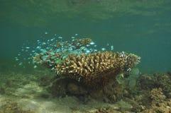 Fish at coral block Stock Image