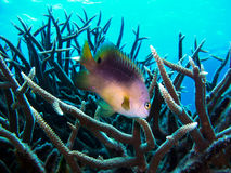 Fish and Coral Stock Photos