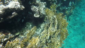 Fish and coral of the Red Sea. Slow motion stock video