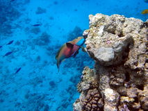 Fish and coral reef Stock Photo