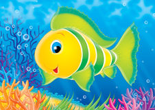 Fish of a coral reef. Illustration for children. A series  Reef . Animals of a coral reef. Fish Stock Photos
