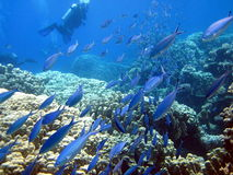 Fish and coral reef Royalty Free Stock Photo