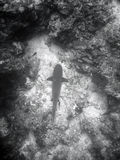 Fish and coral reef. Black and white view of fish surrounded by coral reef stock photos