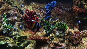 Fish in a coral reef stock footage