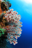 Fish and coral reef Stock Image
