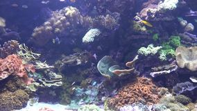 Fish in coral reef stock video