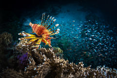 Fish with coral reef Royalty Free Stock Photos