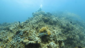 Fish and coral reef. A long shot of a huge coral reef underwater and fishes stock video footage